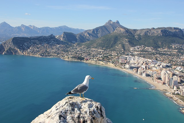 Seagull in front of Alicante via https://pixabay.com/en/seagull-ave-bird-calpe-alicante-264075/
