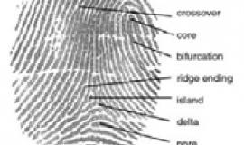 Fingerpint by DoD_Biometrics_Consortium_Conference_13_Sep_2007.pdf: UnknownUnknown derivative work: Geo Swan [Public domain], via Wikimedia Commons
